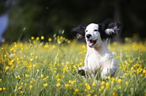 duurzame hondenspullen